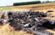 Bị côn đồ đốt cháy rơm vì chưa 'làm luật' bảo kê… cánh đồng