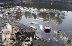Đà Nẵng: Cá chết trắng kênh cạnh trạm xử lý nước thải