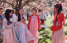Tết Thượng tị hất văng lễ hội Hanami