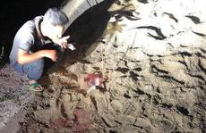 Công an vào cuộc điều tra vụ bé trai 7 tuổi bị đàn chó cắn tử vong