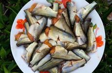 Hương vị quê hương: Cá ngạnh chình ình bụng trứng