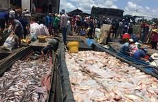 Đồng Nai: Hàng trăm tấn cá phơi bụng trên sông sau 1 đêm