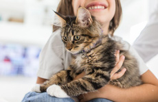 Mèo cắn, cào cũng gây bệnh dại như chó?