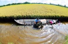 Triển vọng từ mô hình tôm sinh thái - lúa an toàn