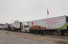 Hàng đoàn xe container chở trái vải Bắc Giang đi khắp cả nước