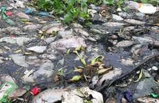 Đà Nẵng: Cá chết trắng, gây ô nhiễm nặng