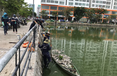 Đà Nẵng: Hơn 5 tấn cá chết trắng tại 2 hồ Thạc Gián và Vĩnh Trung