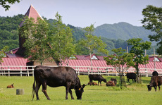 Top 10 mô hình chăn nuôi 'hái ra tiền' tại Việt Nam