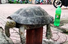 Rùa Răng quý hiếm bày bán công khai giữa trung tâm TP HCM