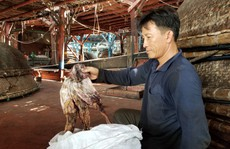 Gần 1.000 tấn khô mực ở Quảng Nam bí đường sang Trung Quốc