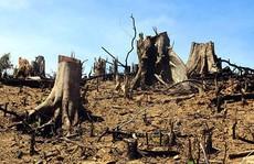 Bắt giam nguyên Trạm trưởng Trạm bảo vệ rừng Đại Ninh