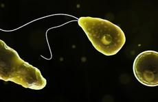"""Đi bơi, tử vong vì nhiễm khuẩn """"ăn não"""""""