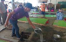 Đình chỉ hoạt động cơ sở gây ô nhiễm làm chết cá ở sông Chà Và