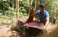 Bất ngờ với kết luận xử lý 'nhẹ tay' của UBKT Tỉnh ủy Quảng Bình về 2 vụ phá rừng (!)