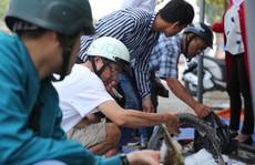 Người dân TP HCM chen nhau mua cá tầm bị ngộp nước