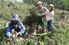 Chặt phá hàng ngàn cây keo tràm của người khác vì cho rằng trồng trên đất của mình