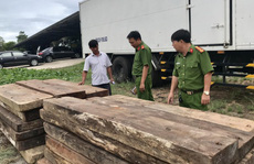 Phát hiện kho chứa gỗ 'lậu' quý ở Trường Sơn