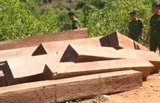 Công an khác địa bàn bắt đường dây gỗ lậu lớn
