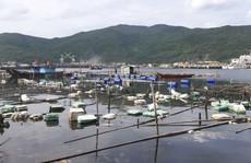 Phá nát vịnh Mân Quang