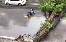 Hà Nội: Mưa rất to, cây cối đổ la liệt  do ảnh hưởng bão số 3