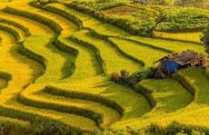 7 cung đường lúa chín ngoạn mục để 'săn' ảnh mùa vàng