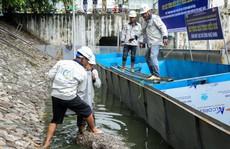 Chuyên gia Nhật Bản sẽ tắm nước sông Tô Lịch sau xử lý