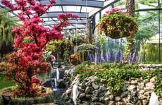 Khu vườn cổ tích với 15.000 bông hoa treo ngược