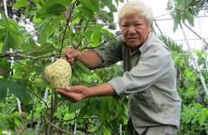Lão nông với vườn mãng cầu dai cho trái 'khổng lồ'