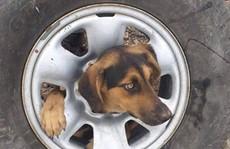 Giải thoát cô chó kẹt đầu 'không hiểu nổi' vào giữa bánh xe