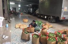 Ngỡ ngàng với nông dân Củ Chi trồng rau an toàn có đến 4 chiếc ôtô