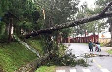 Lâm Đồng: Cây gãy đổ, nhà bị tốc mái, ngập lụt la liệt