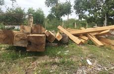 Chi hàng trăm tỉ để bảo vệ, rừng vẫn 'chảy máu'