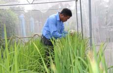 Bắt tay làm gạo hữu cơ