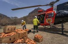 Úc: 'Mưa' cà rốt và khoai lang cứu đói động vật bị cháy rừng