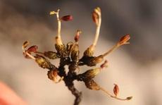 Số phận bi thảm của 10 loài thực vật mới phát hiện năm 2019