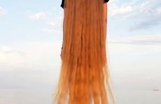 Bí quyết của cô gái nuôi tóc dài gần 2 m trong 30 năm
