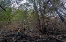 Bất ngờ với loài cây 'khủng long' khiến Úc phải bung toàn lực bảo vệ