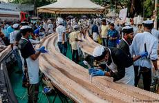 Ấn Độ xác lập kỷ lục làm chiếc bánh ngọt dài nhất thế giới