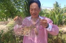 CLIP: Nông dân Cà Mau bắt được cặp chuột lông vàng lạ mắt ngày cuối năm