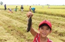 Về miền Tây xem cảnh già, trẻ hò reo săn chuột đồng mùa Tết