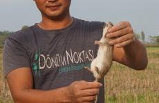 Thịt chuột đồng, lòng vòng giai thoại