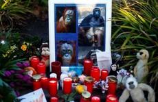 Vụ cháy sở thú Đức, thiêu chết bầy linh trưởng: Do đèn lồng Trung Quốc