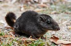 Loài thú cổ tuyệt chủng 11 triệu năm trước bất ngờ xuất hiện ở Quảng Bình