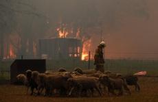 Cháy rừng ở Úc: Điều tồi tệ nhất chưa đến!