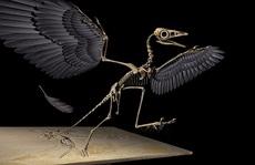'Quái thú' biến hình dang dở giữa 2 loài làm khoa học bối rối