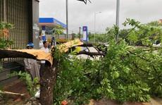 Bão số 6 chưa tới, Quảng Ngãi hứng mưa gió, nhiều tàu cá gặp nạn