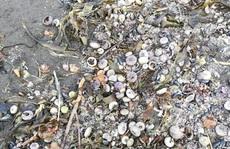 Thảm hoạ Kamchatka: Lớp bọt khổng lồ màu vàng xuất hiện, 95% sự sống dưới biển bị xóa sổ