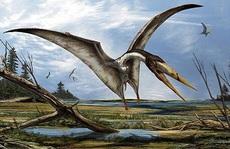 'Cá mập' trong bảo tàng… hóa quái vật bay chưa từng thấy trên thế giới