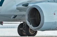Chuyến bay của hãng Alaska va chết gấu khi hạ cánh