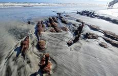 Dạo biển, cặp đôi gặp 'tàu ma' bất ngờ hiện ra trên bãi cát